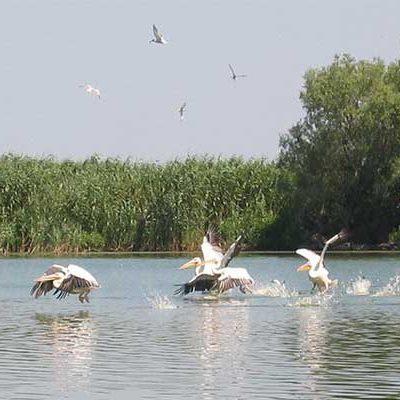 Pelikánok a Duna-deltában